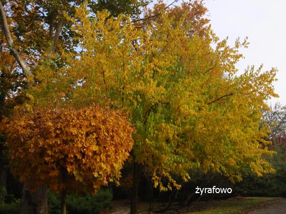 jesien 2011_23