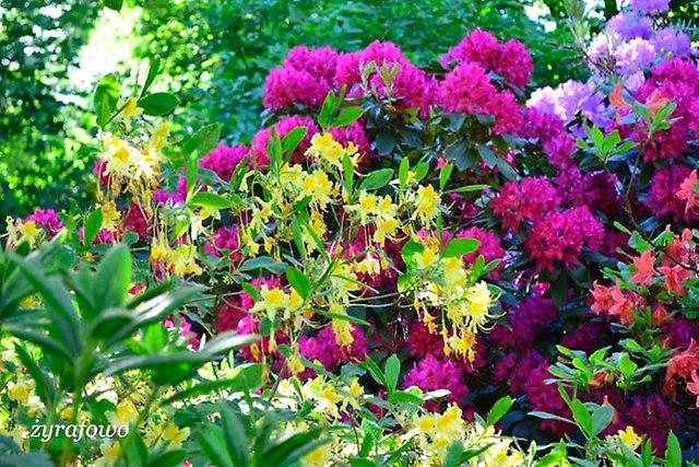Ogrod Botaniczny_12