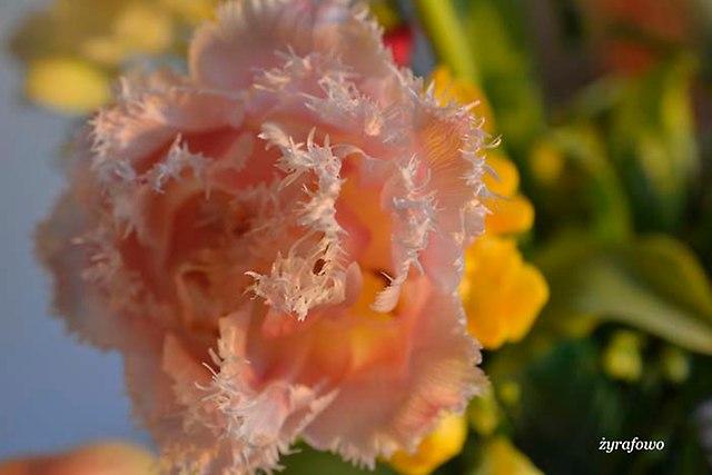 kwiaty 2014_25