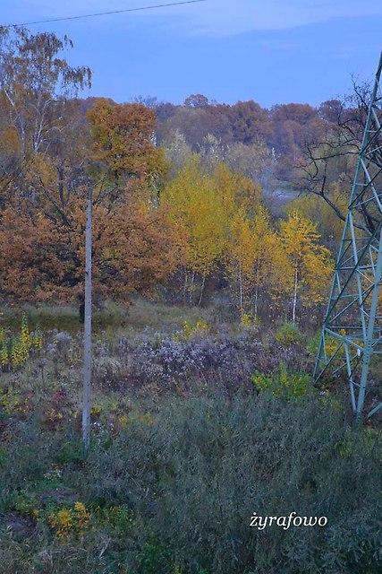 jesien 2012_260