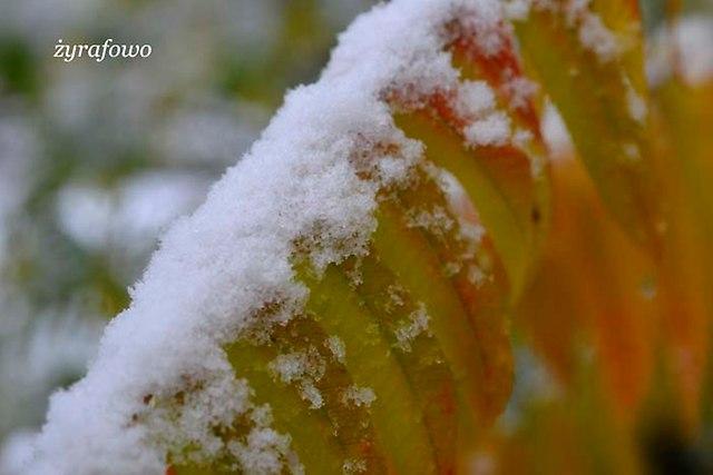 jesien 2012_139