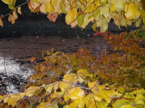 jesien 2009 11