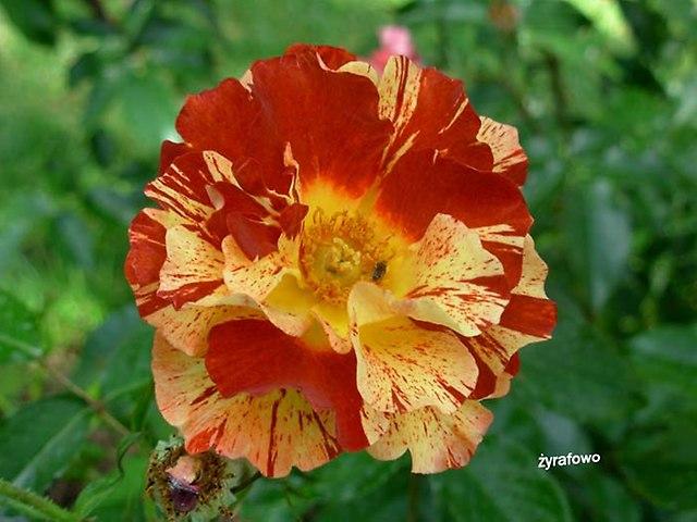 kwiaty_49