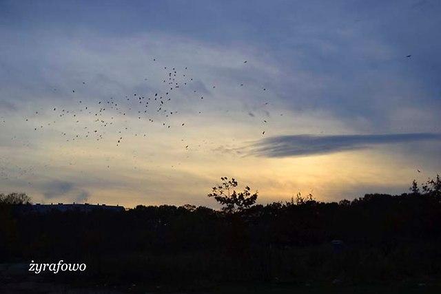 jesien 2012_242
