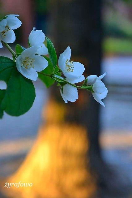 wiosna 2014_149
