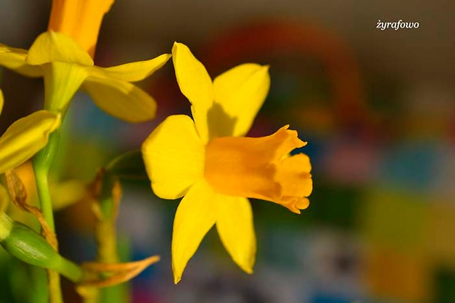 wiosennie_07