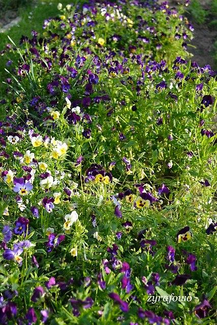 wiosna 2014_176