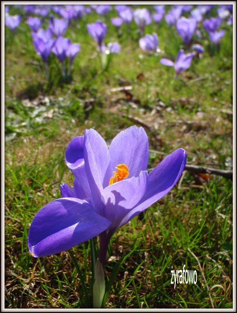 wiosna 2012_03