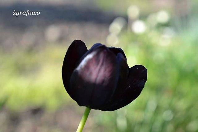 wiosna 2013_114