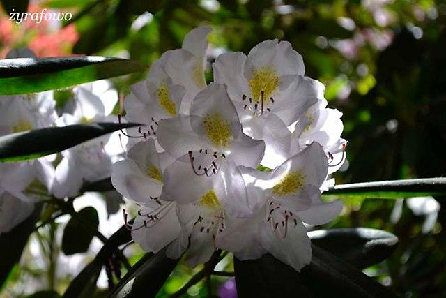 Ogrod Botaniczny_01