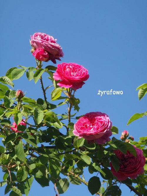 kwiaty_40