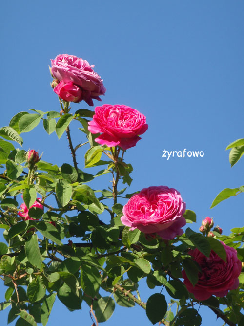 wiosna_43