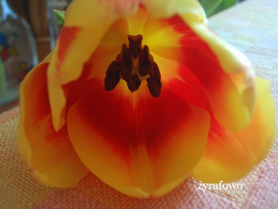 kwiaty_11