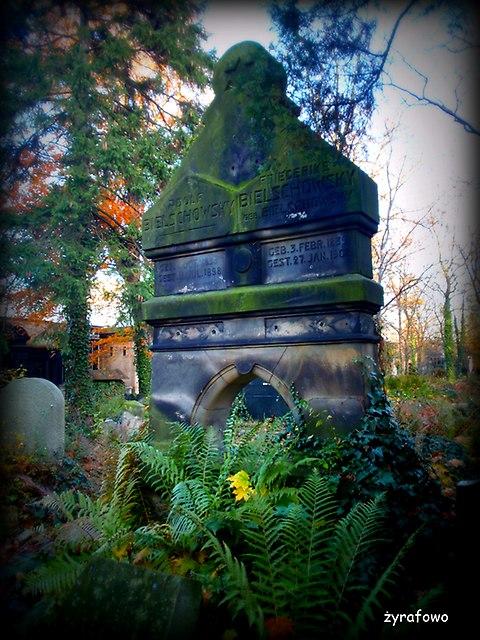 Cmentarz Zydowski_06