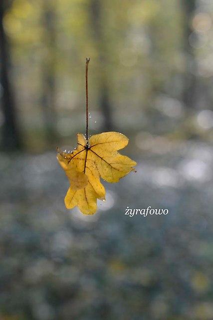 jesien 2012_31