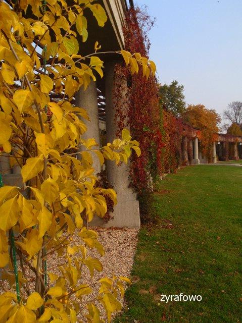 jesien 2011_15