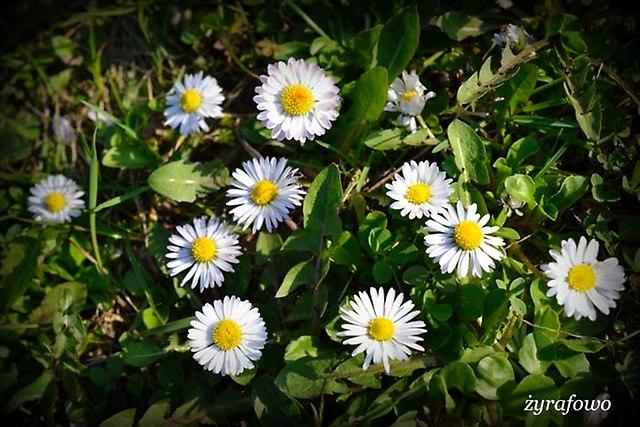 wiosna 2014_36