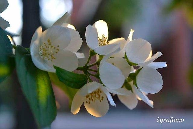 wiosna 2014_146
