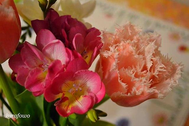 kwiaty 2014_15