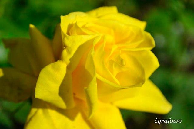 wiosna 2014_158