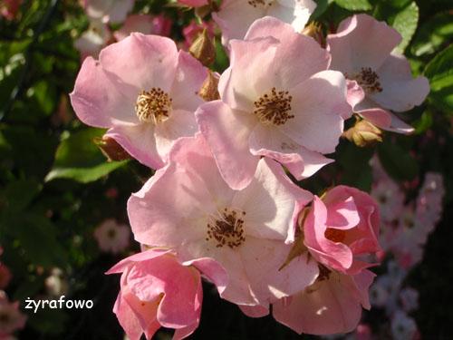 wiosna 2010_40