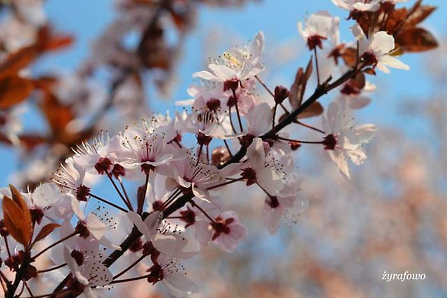 wiosna 2014_37
