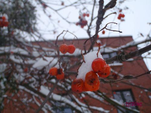 zima 2010_31
