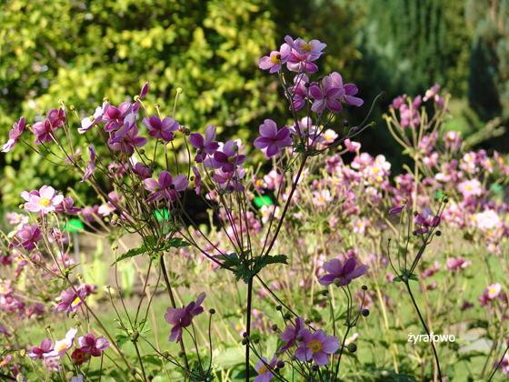 Ogrod Botaniczny 2011.08_20
