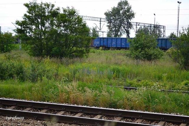 Wroclaw 2013_03