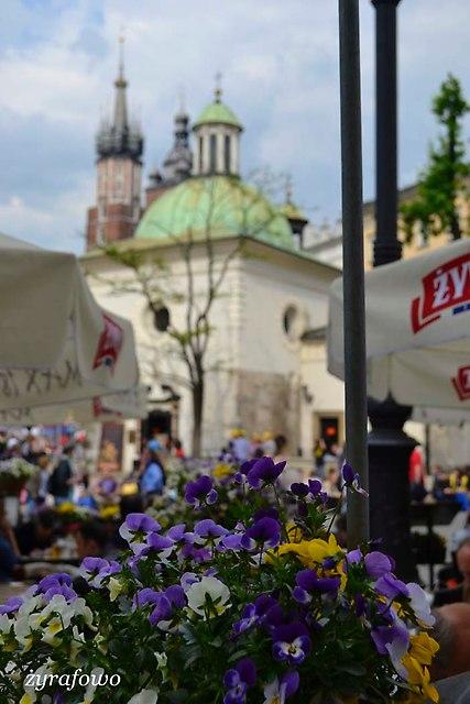 Krakow 2014_29