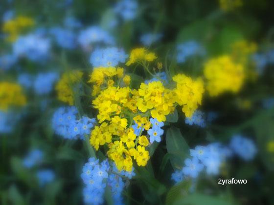 wiosna 2011_87