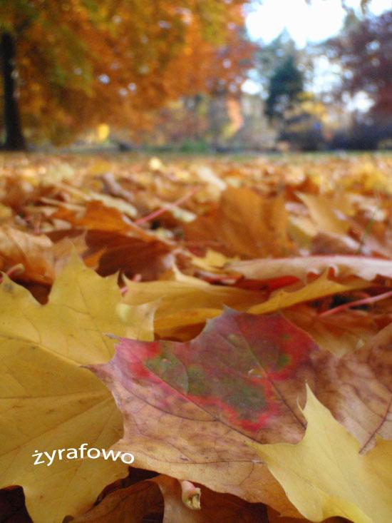 jesien 2010_34