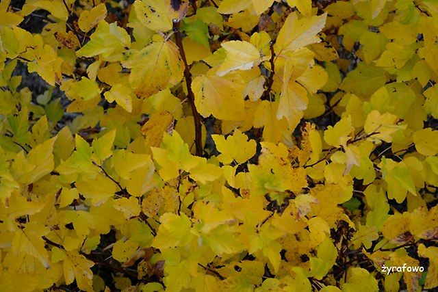 jesiennie_02