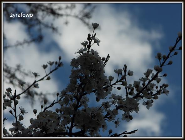 wiosna 2012_43