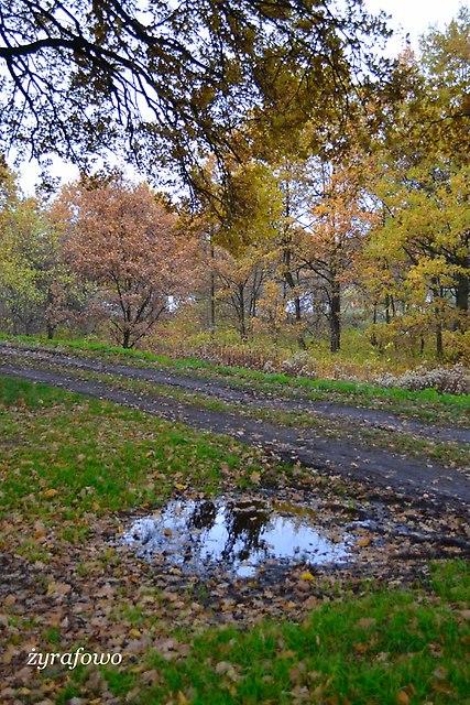 jesien 2012_249