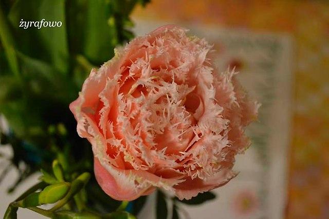 kwiaty 2014_13