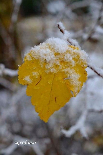 jesien 2012_136