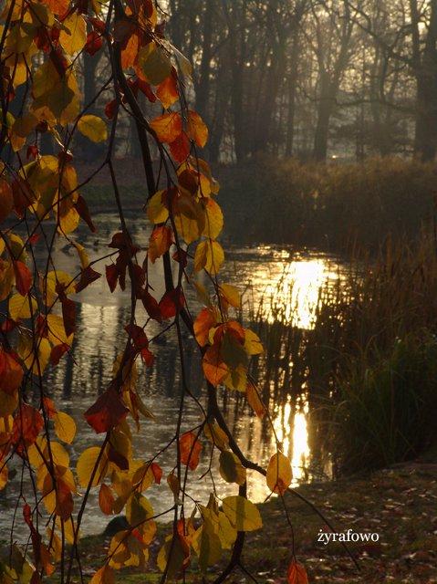 jesien 2011_56