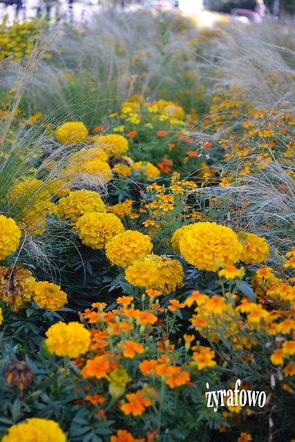 kwiaty 2012_39