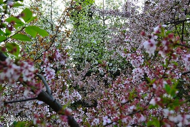 wiosna 2013_44