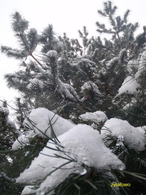 zima 2010_02
