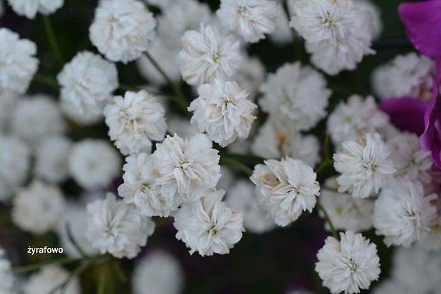 kwiaty 2012_12