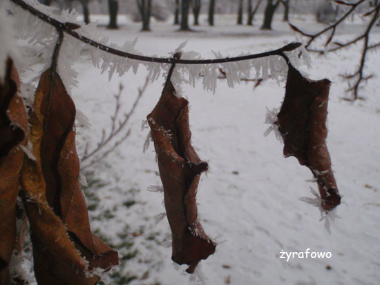 zima_20