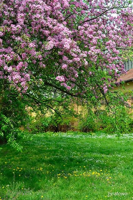 wiosna 2015_33
