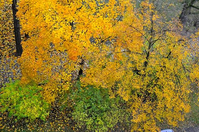 jesien 2014_45