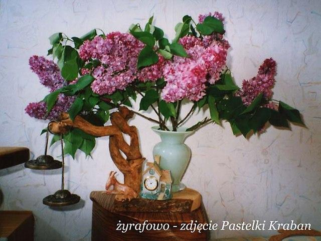 archiwum zdjęciowe_23