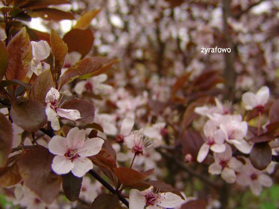 wiosna 2011_51
