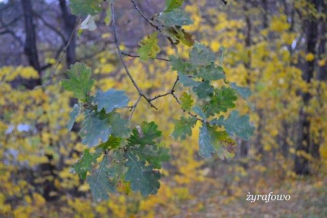jesien 2012_251