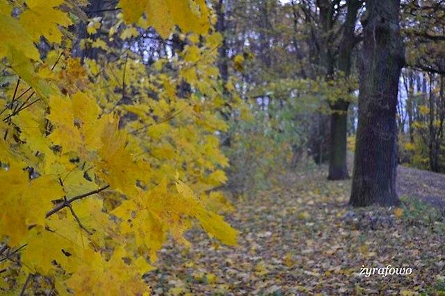jesien 2012_247