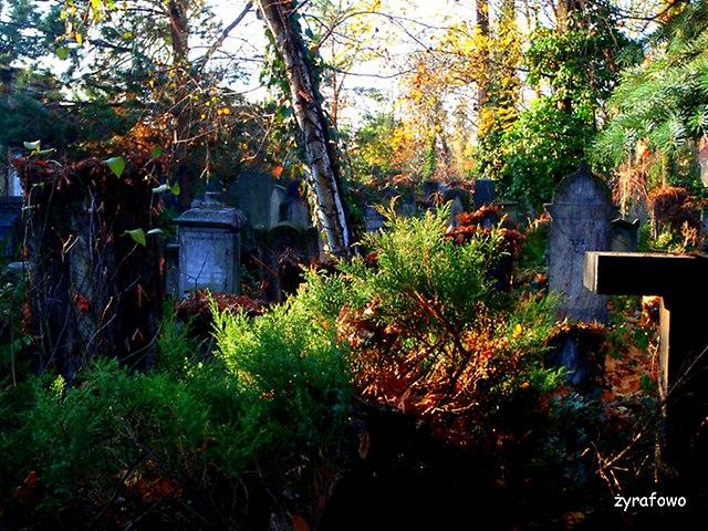 Cmentarz Zydowski_16